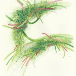 Archidem Green 2426, available